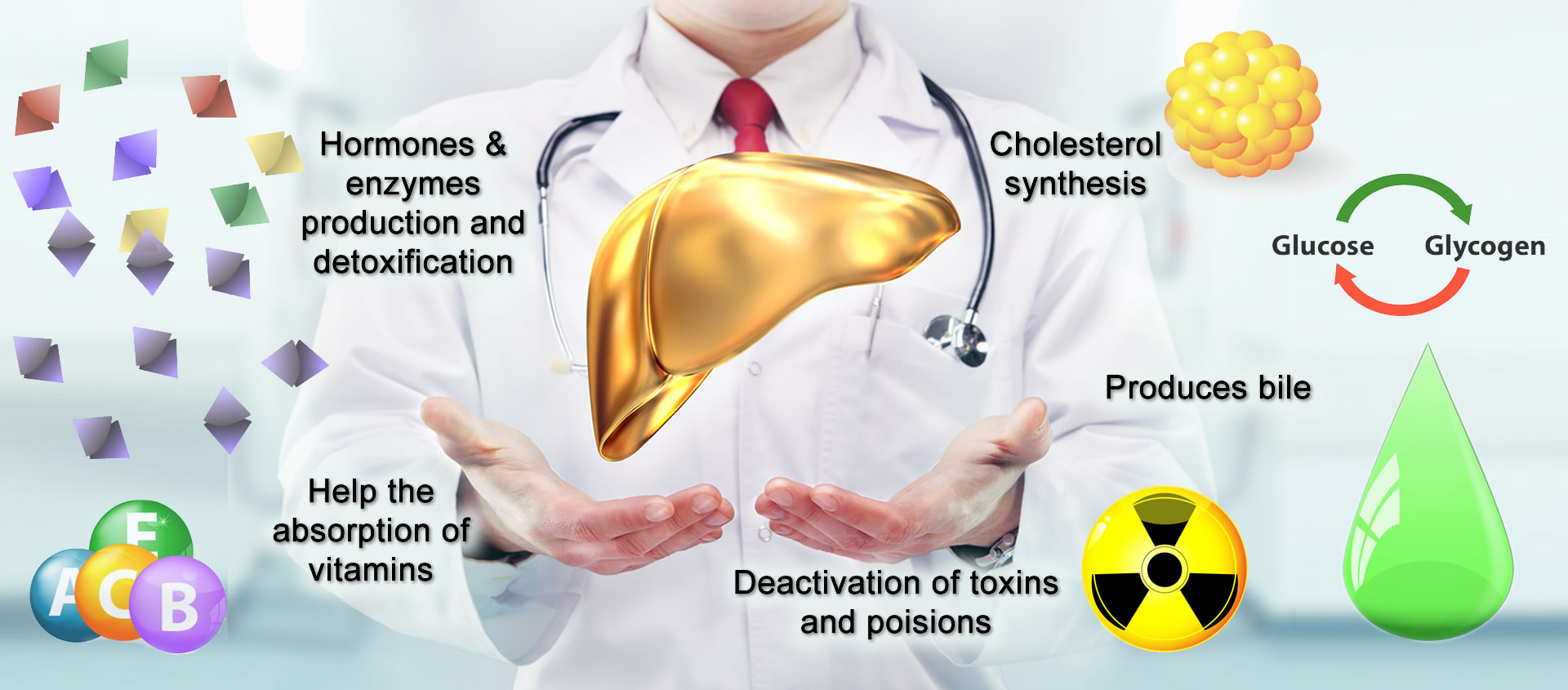 what does the liver do and why is it so important? - buy, Human body